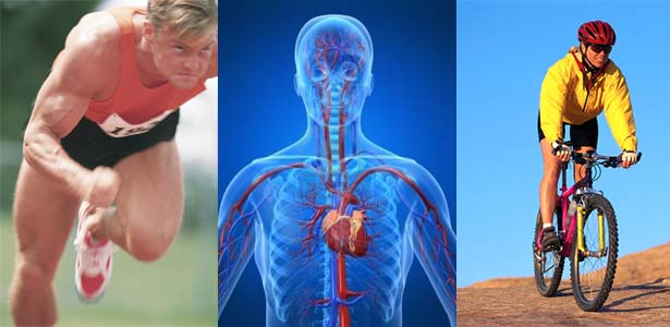 What is cardio and why its important